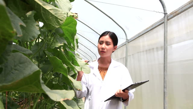 researcher or inspector of agricultural - biology stock videos & royalty-free footage