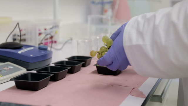 researcher preparing grapes for research - scientific sample stock videos & royalty-free footage
