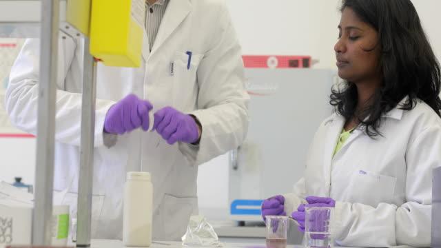 vídeos de stock, filmes e b-roll de examinar a amostra científica de pesquisadores - amostra científica