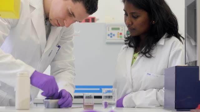 researchers examining scientific sample - scientific sample stock videos & royalty-free footage
