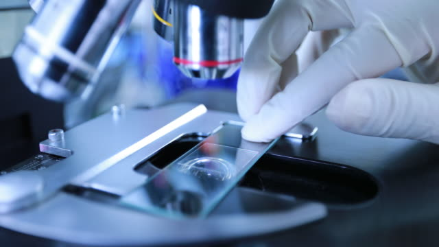 researchers looking into a microscope - microscope slide stock videos and b-roll footage