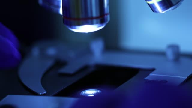 vídeos de stock e filmes b-roll de researchers using a microscope in laboratory - microscópio