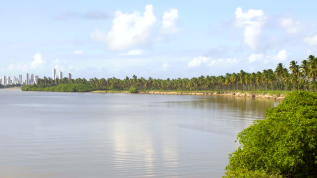 reserva do paiva beach in pernambuco state, brazil - reserva natural stock videos and b-roll footage