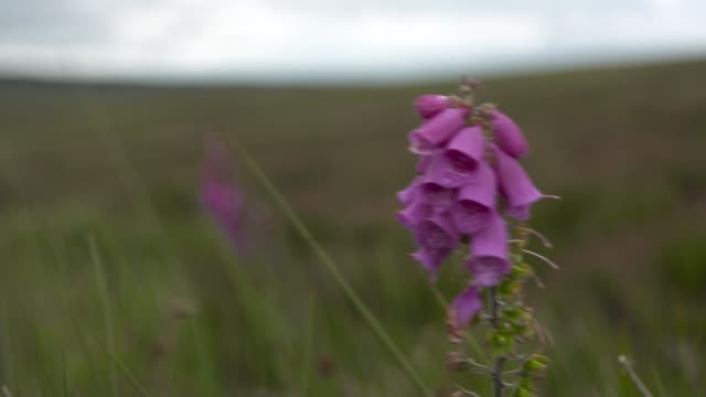 vídeos de stock e filmes b-roll de residents hoping to raise millions to turn scottish grouse moor into nature reserve scotland dumfries and galloway langholm ext 'buccleuch square'... - street name sign