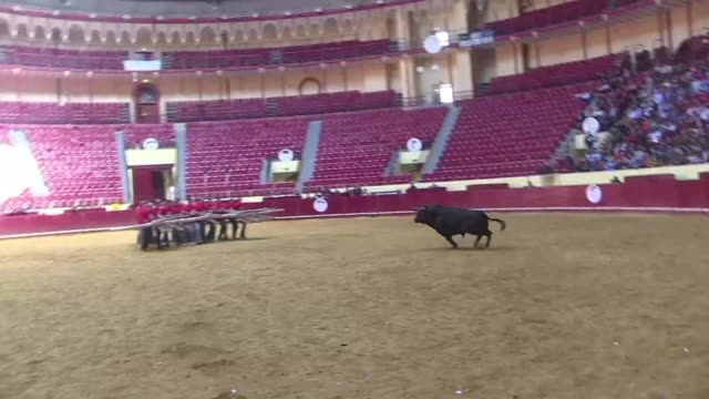 residents of lisbon celebrate the tradition of bull fighting defending it as an essential part of portuguese history - portuguese culture stock videos & royalty-free footage