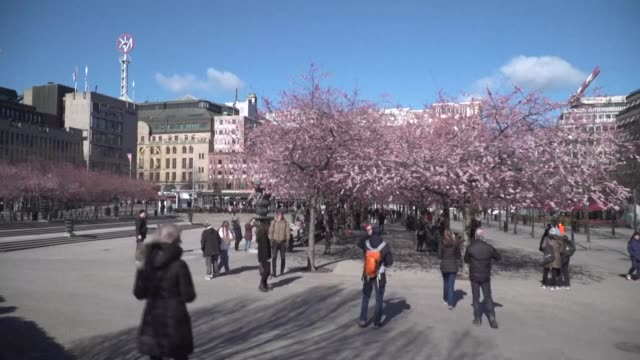 residents of stockholm come out in the sunshine to visit cherry blossom in bloom in the city centre despite worries over the new coronavirus - sweden stock videos & royalty-free footage