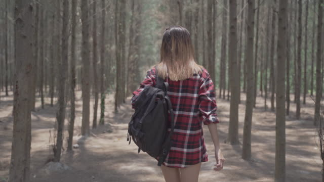 4k resolution backside cool woman walking in the forestwalking in the forest - footpath stock videos & royalty-free footage