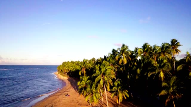 4k resolution drone flying from tropical beach above palm trees - hispaniola stock videos and b-roll footage