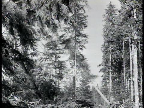 vídeos y material grabado en eventos de stock de resources; lumber: tall tree falling in woods lumber. fishing: fishermen pulling net w/ fish. - narrar