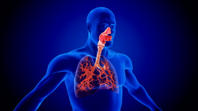 respiratory system - bronchi stock videos & royalty-free footage