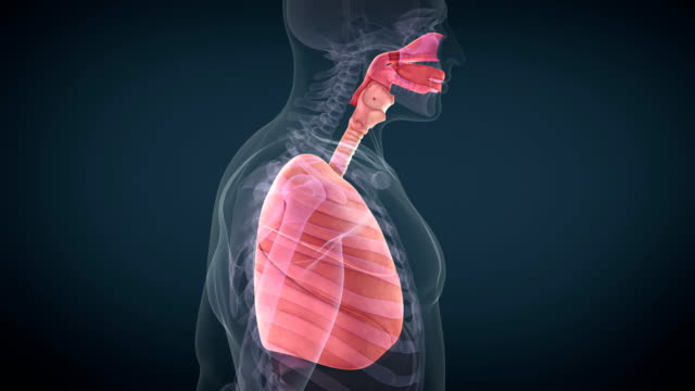 respiratory system - respiratory machine stock videos & royalty-free footage