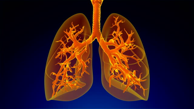 respiratory system - thyroid gland stock videos & royalty-free footage