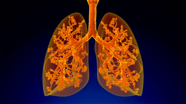 respiratory system - bronchiole stock videos & royalty-free footage