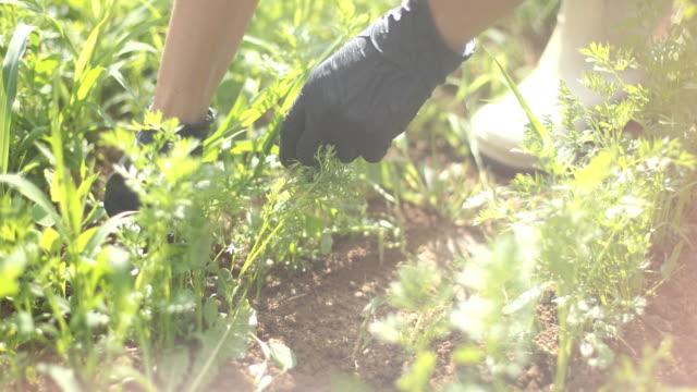 responsible gardener - grass stock videos & royalty-free footage
