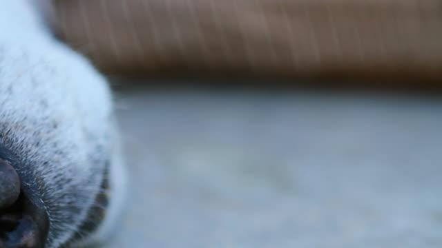 vídeos y material grabado en eventos de stock de resting dog - nariz de animal
