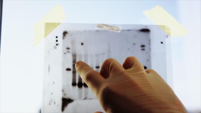 vídeos de stock e filmes b-roll de dna result research: science medical research - modificação genética