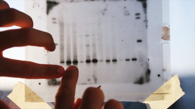 dna result research: science medical research - dna test stock videos and b-roll footage