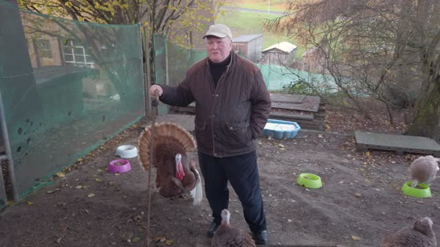retired businessman brian moodie 74 and his sister gillian moodie, herds his flock of turkeys along the street near his home on november 12, 2020 in... - business person stock videos & royalty-free footage