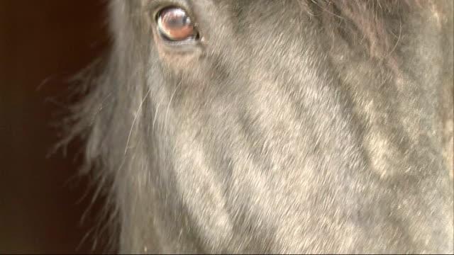 retired police horse undergoes serious surgery england buckinghamshire princes risborough ext retired police horse chiswick led along chiswick antony... - バッキンガムシャー点の映像素材/bロール