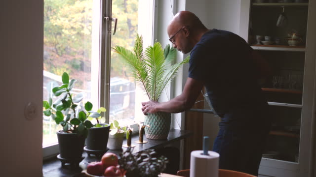 retired senior man watering houseplants while looking through window at home - pot plant stock videos and b-roll footage