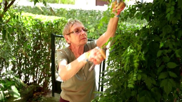 retired senior woman gardening - gardening glove stock videos & royalty-free footage