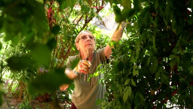 retired senior woman gardening - formal garden stock videos & royalty-free footage