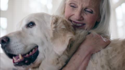 vídeos y material grabado en eventos de stock de retirees at home - mascota