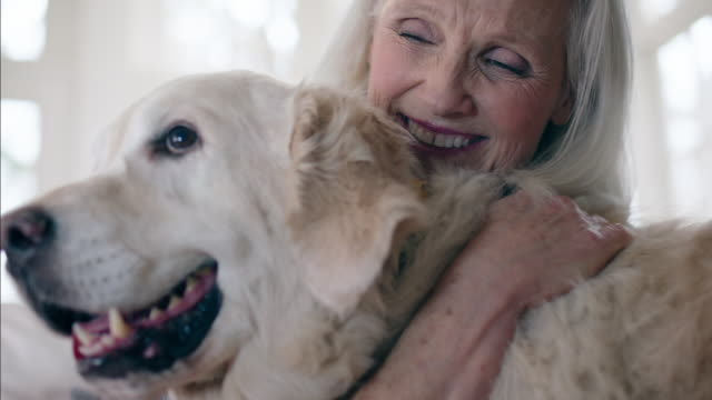 retirees at home - pets stock videos & royalty-free footage