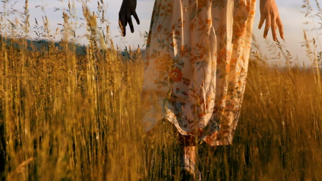 retro woman walking in green field of wheat at sunset - floral pattern stock videos & royalty-free footage