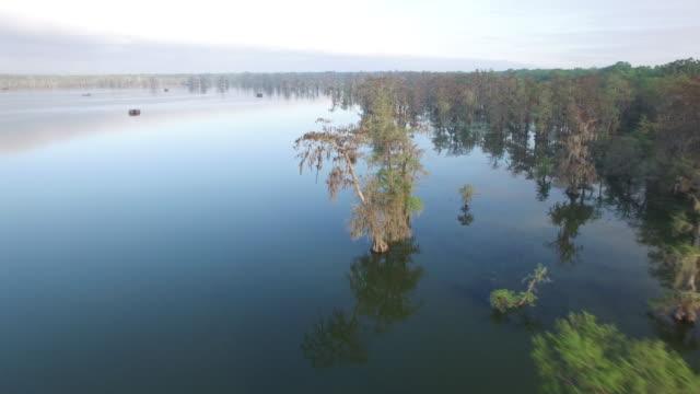 reveal fisherman fishing in bayou swamp - drone aerial 4k everglades, swamp bayou with wildlife alligator nesting ibis, anhinga, cormorant, snowy egret, spoonbill, blue heron, eagle, hawk, cypress tree 4k nature/wildlife/weather - bayou lafourche stock-videos und b-roll-filmmaterial