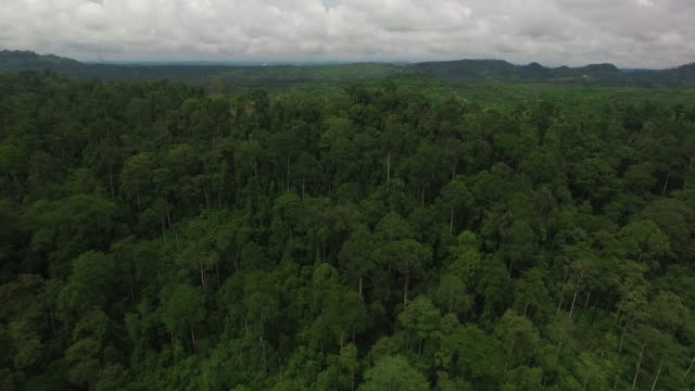 vidéos et rushes de reveal of large deforested area for palm oil - forêt tropicale humide