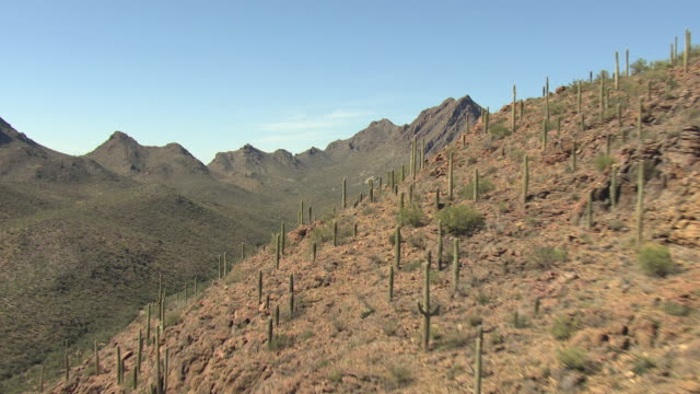 WS AERIAL Reveal valley over saguaro ridge and low through Tucson Mountains / Tucson, Arizona, United States