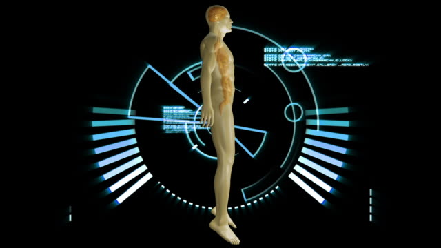 revolving human form showing organs - postura video stock e b–roll