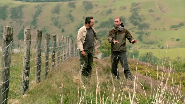 vídeos y material grabado en eventos de stock de rewilding britain campaign: mid-wales; wales: ext sheep grazing on open hillside long shot of george monbiot and reporter walking along through hilly... - programa de televisión