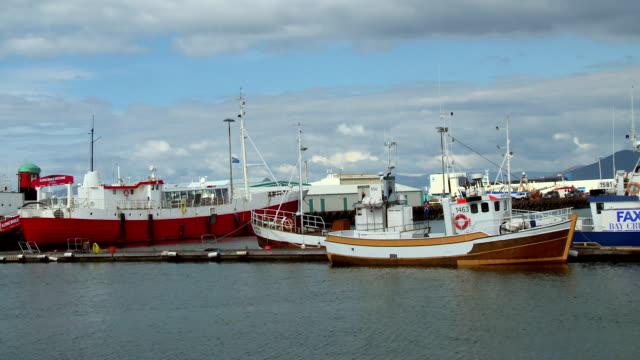 reykjavik port - whaling stock videos & royalty-free footage