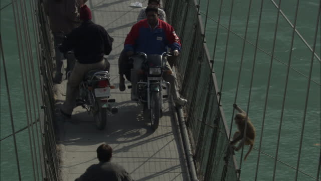rhesus macaque swings along bridge, rishikesh, india available in hd. - macaque stock videos and b-roll footage
