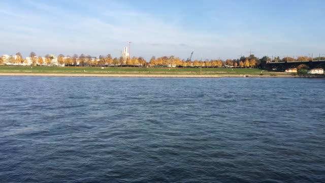 rhine river in cologne - wasservogel stock-videos und b-roll-filmmaterial