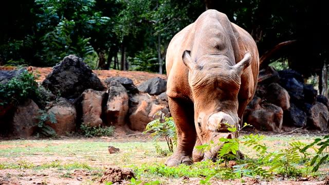Rhino Territory