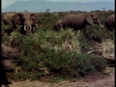 a rhinoceros and her baby walking through the brush with elephants in the background. - medium group of animals stock videos & royalty-free footage