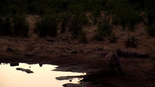LS Rhinoceros By The Waterhole At Dusk