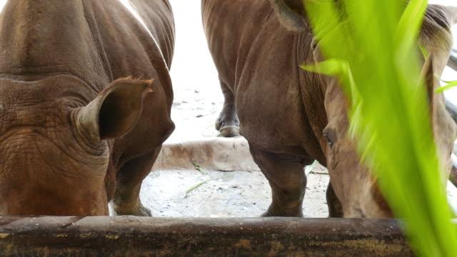 vídeos de stock, filmes e b-roll de olhos de rinoceronte - dedo do pé humano