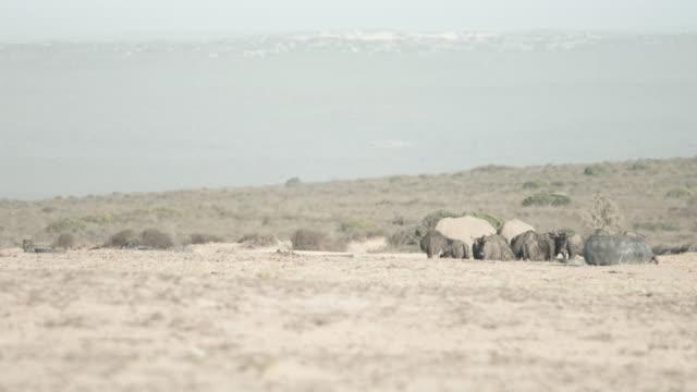 rhinoceros in african savannah, panning shot - medium group of animals stock videos & royalty-free footage