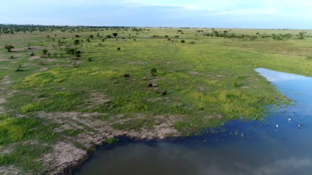 vidéos et rushes de rhinoceros in south africa - république d'afrique du sud