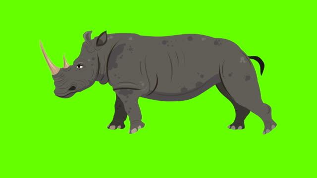 rhinoceros run cycle animation - rhinoceros stock videos & royalty-free footage