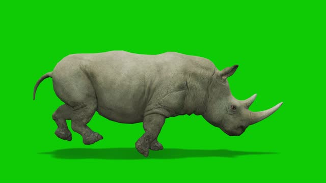 rhinoceros running animation on green screen. the concept of animal, wildlife, games, back to school, 3d animation, short video, film, cartoon, organic, chroma key, character animation, design element, loopable - rhinoceros stock videos & royalty-free footage