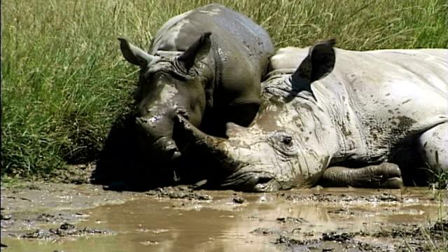 Rhino's Mud Bath