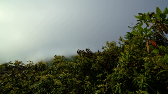 stockvideo's en b-roll-footage met rhododendron forest and fog on the flank of mt. hood in summer - pacific crest trail