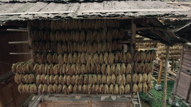 rice drying in huts in huanggang dong village in guizhou china - wood material stock videos & royalty-free footage