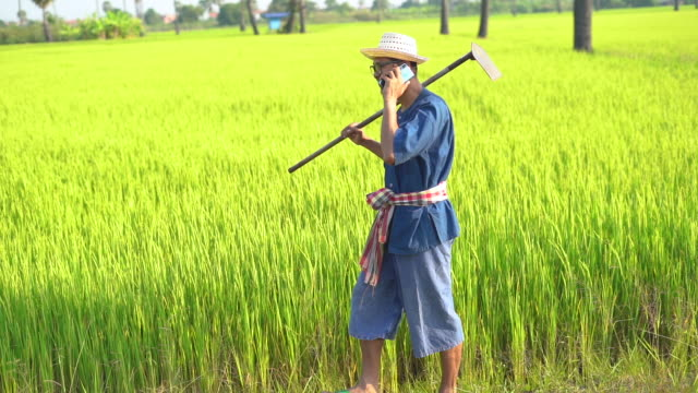 rice farmer man talking using mobile phone - organic farm stock videos & royalty-free footage
