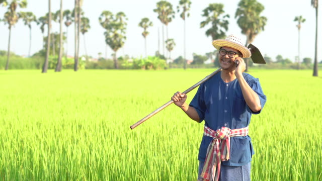 rice farmer talking on mobile phone - 水田点の映像素材/bロール